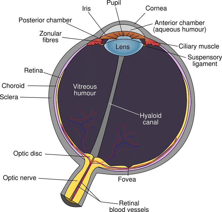 A Few Things About Retinal Tear Surgery That You Did Not Know Before