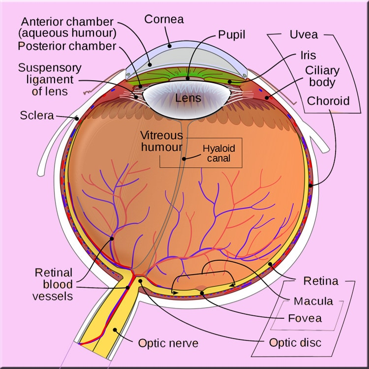 What Is Posterior Vitreous Detachment